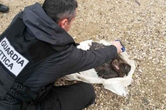 cagnolina morta terracina