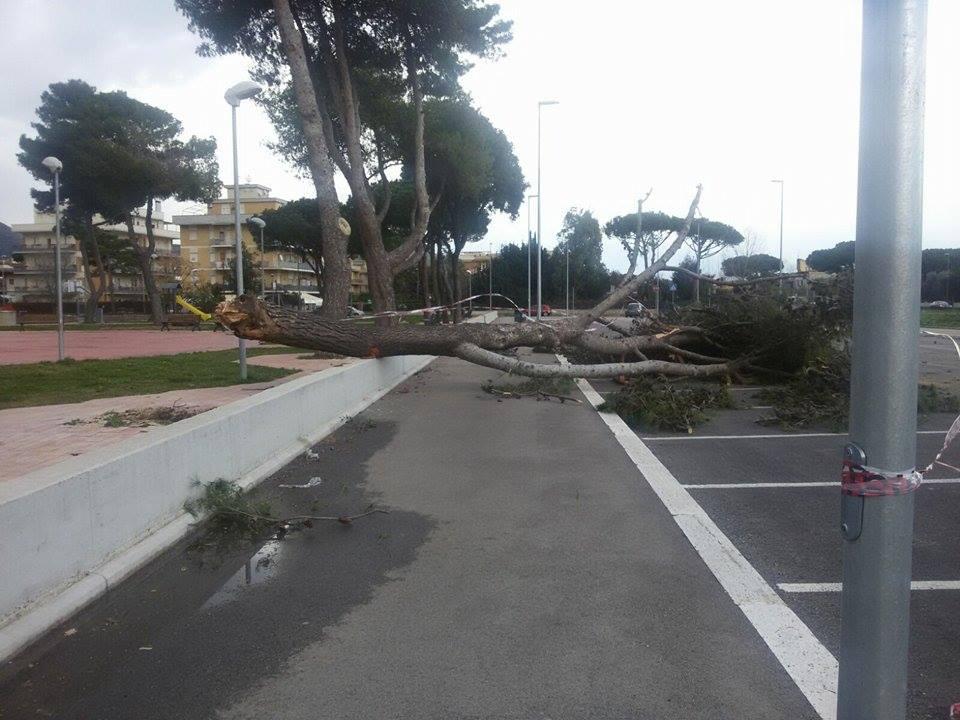 albero caduto Terracina. anxur time